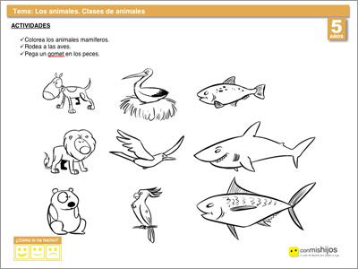 Clases de animales. Ejercicios para niños