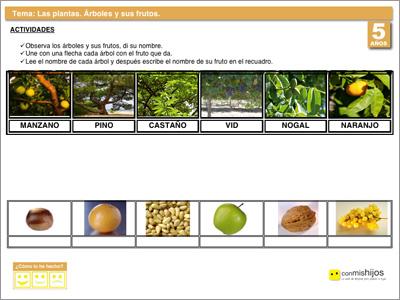 Los rboles y sus frutos Ficha de conocimiento del entorno