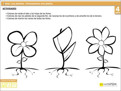 Conocer una planta ejercicio escolar para ni os - Fichas de plantas para ninos ...