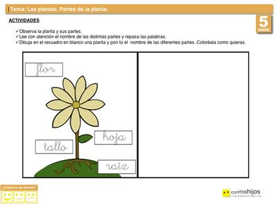 Partes de una planta. Actividades escolares para niños