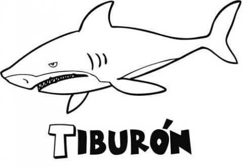 Dibujos Reales De Tiburones Para Colorear Imagui