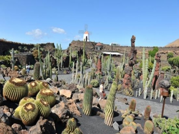 jard n de cactus en lanzarote las palmas de gran canaria. Black Bedroom Furniture Sets. Home Design Ideas