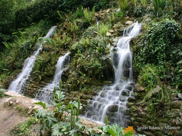 Jard n bot nico atl ntico en gij n asturias for Jardin urbano gijon