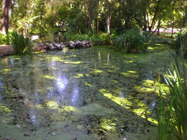 Jard n bot nico en coria c ceres for Jardin botanico talleres