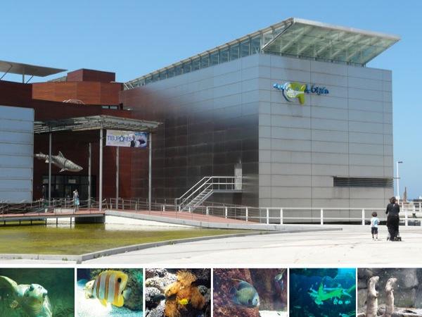 acuario de gij n asturias