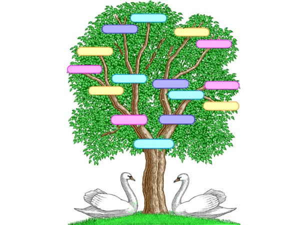 Rbol geneal gico para ni os for Nombres de arboles en ingles