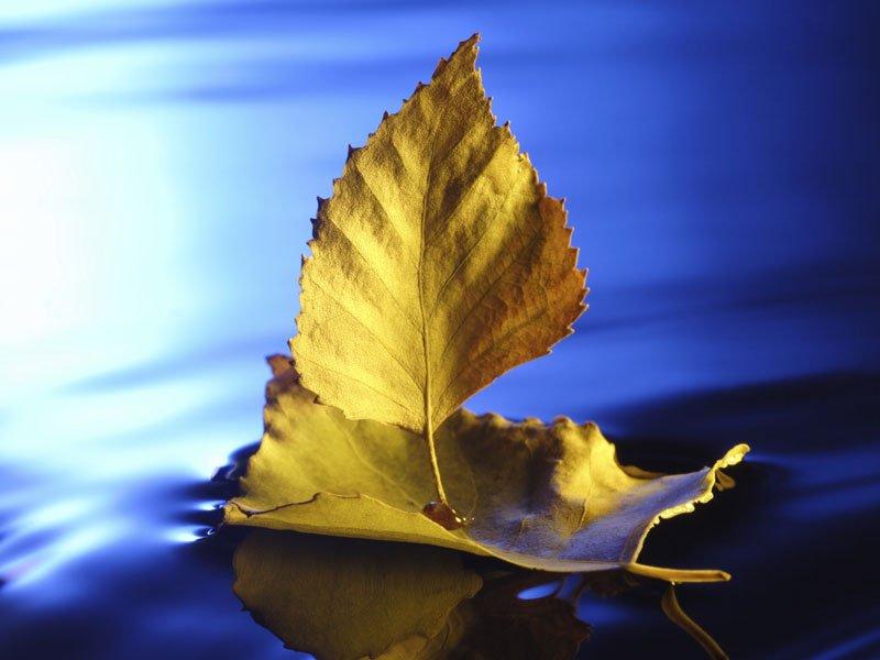 Barco de hojas