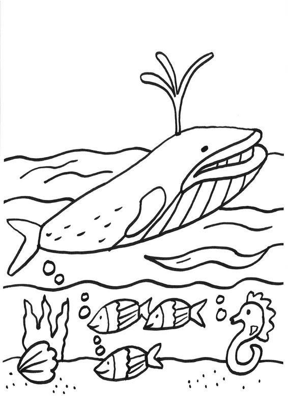 Ballena con rayas: dibujos para colorear e imprimir