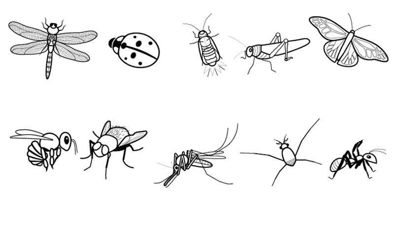 Dibujo De La Palabra Otoño Para Colorear Con Los Niños: Insectos: Dibujo Para Colorear E Imprimir