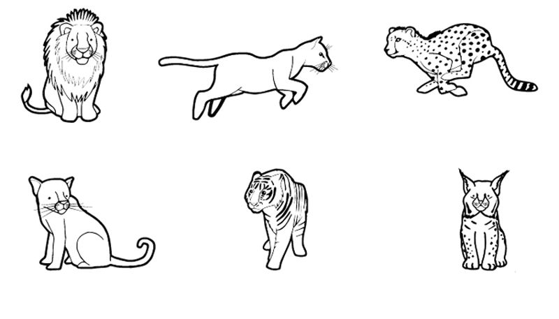 Felinos: dibujo para colorear e imprimir