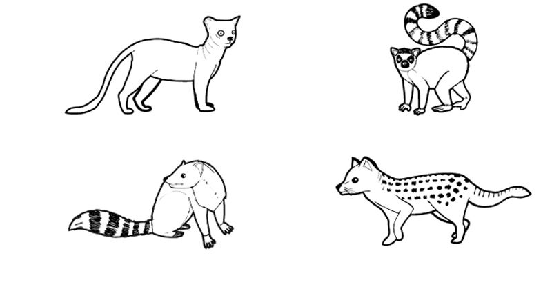 Dibujos Animales Salvajes Para Colorear E Imprimir: Animales De Madagascar: Dibujo Para Colorear E Imprimir
