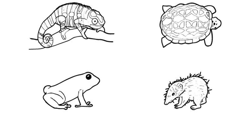 Más animales de Madagascar: dibujo para colorear e imprimir