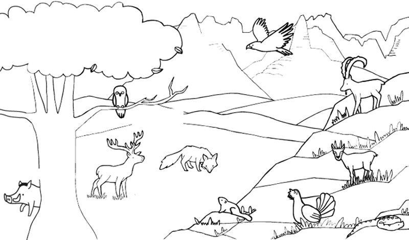 Animales de la montaña: dibujo para colorear e imprimir