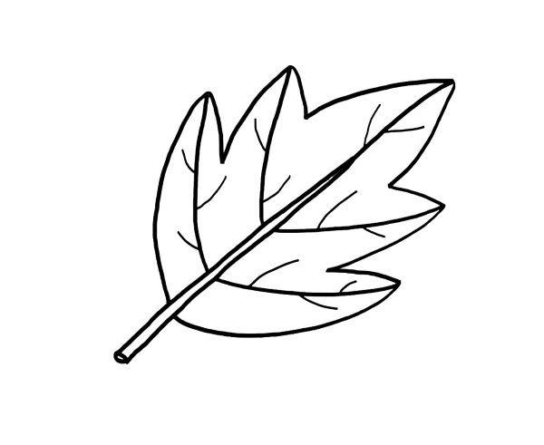Dibujo De Hojas En Otoño Para Colorear: Hojas De Arboles Para Colorear E Imprimir