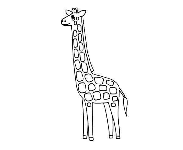 Una jirafa: dibujo para colorear e imprimir
