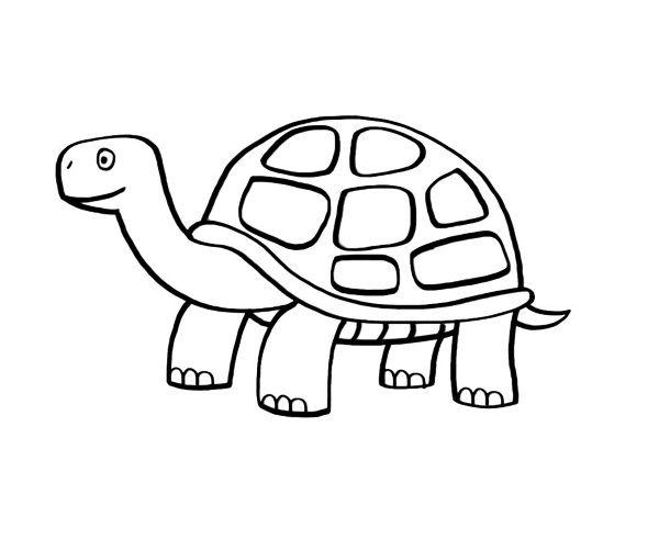 Dibujos De Animales Terrestres Para Colorear E Imprimir: Tortuga: Dibujo Para Colorear E Imprimir