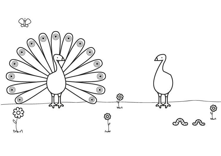 Pavos reales: dibujo para colorear e imprimir