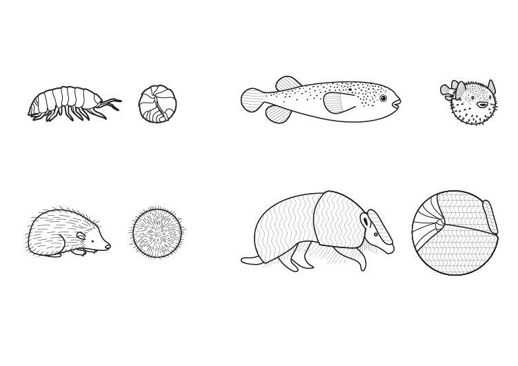 Animales redondos: dibujo para colorear e imprimir