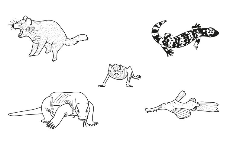 Animales monstruos: dibujo para colorear e imprimir