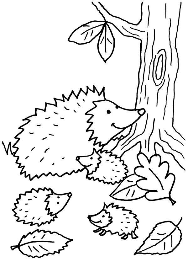 Familia de erizos: dibujo para colorear e imprimir
