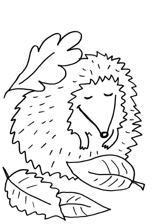 Erizo dormido: dibujo para colorear e imprimir