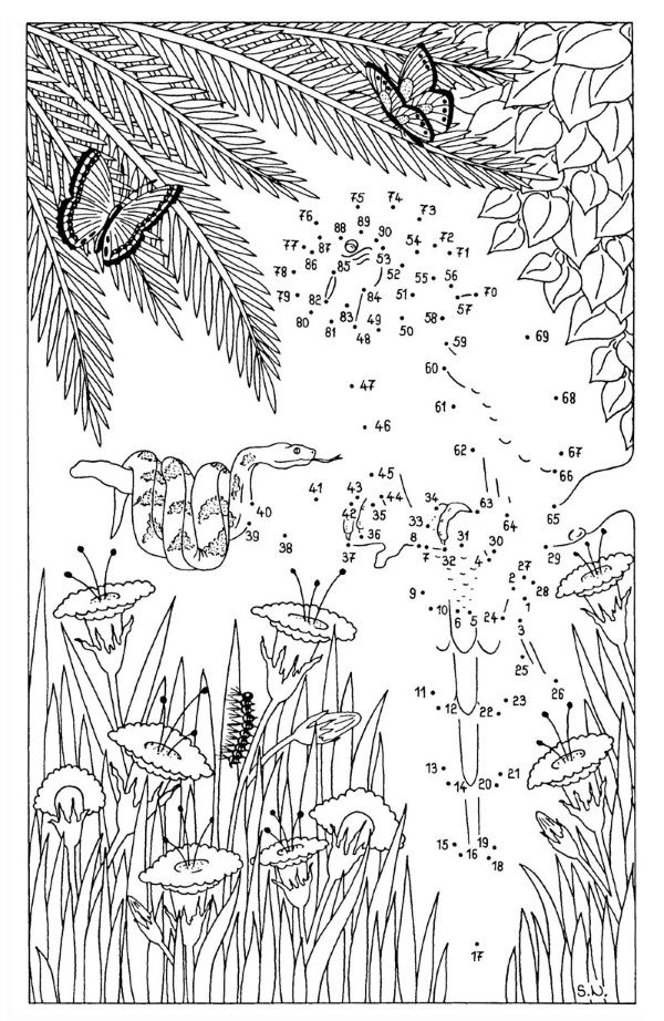 Dibujo de unir puntos de una serpiente y un loro: dibujo para colorear e imprimir