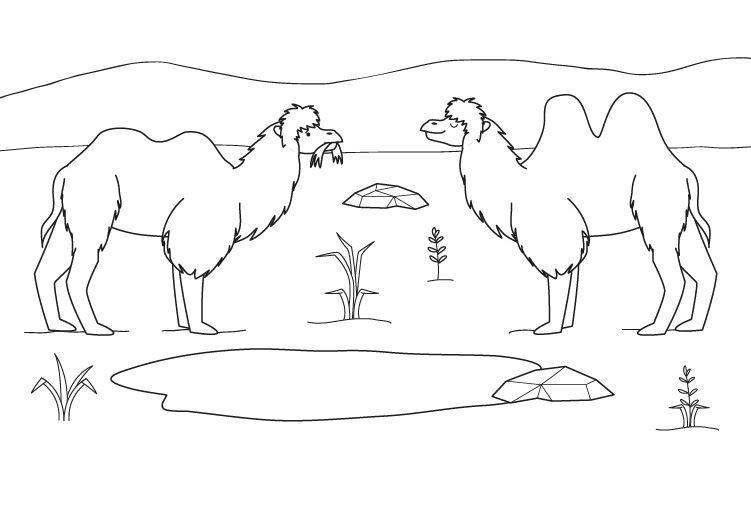 Camellos: dibujo para colorear e imprimir
