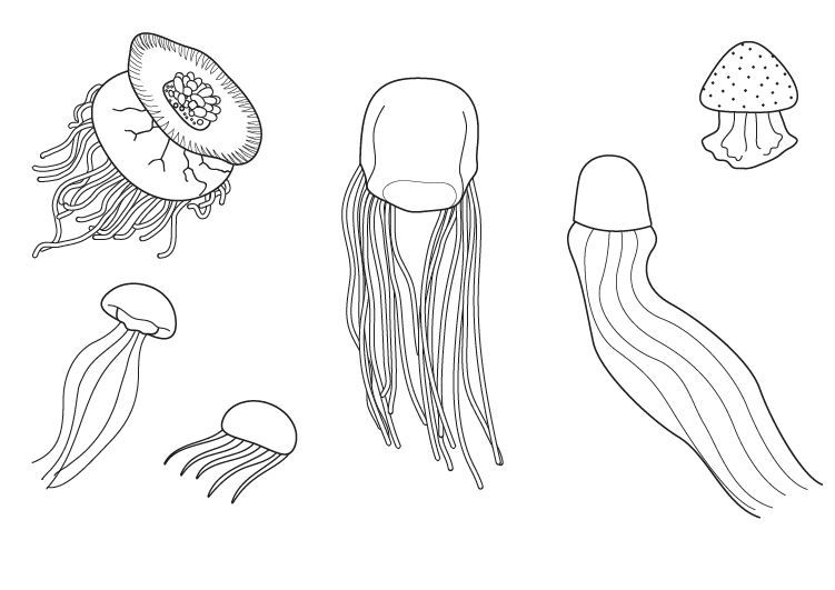 Vistoso Página Para Colorear De Medusa Modelo - Dibujos de Animales ...