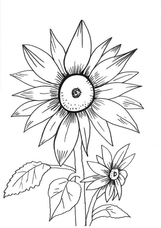 Girasoles: dibujo para colorear e imprimir