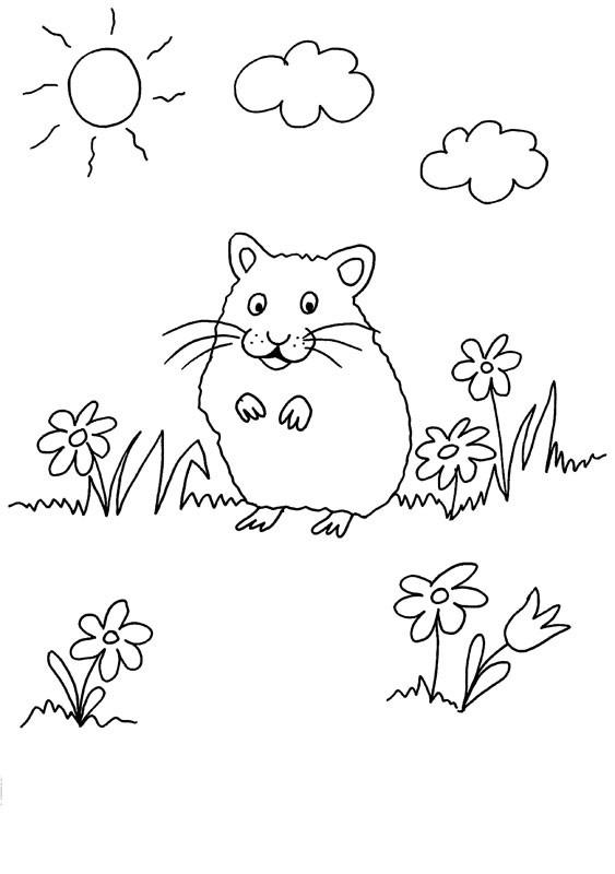 Conejo de india en el campo: dibujo para colorear e imprimir