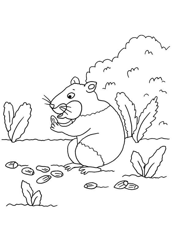 Conejo de india y avellanas: dibujo para colorear e imprimir