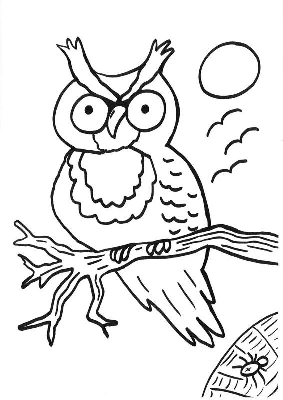 Dibujo para colorear de un búho y una araña