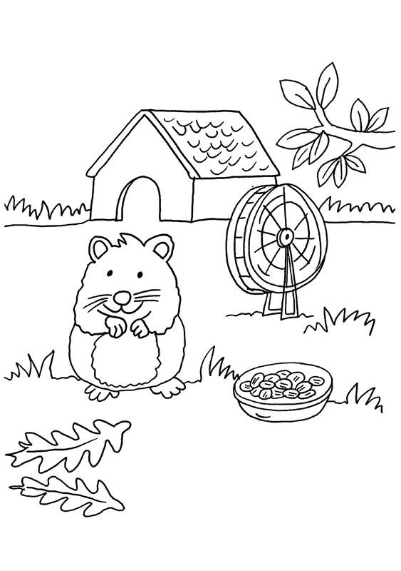 Dibujo para colorear de conejo de india en su casa