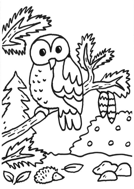 Dibujo para colorear de búho y erizo