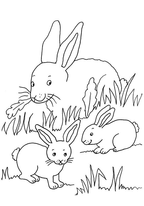Dibujo para colorear de una mamá conejoy sus bebés conejos