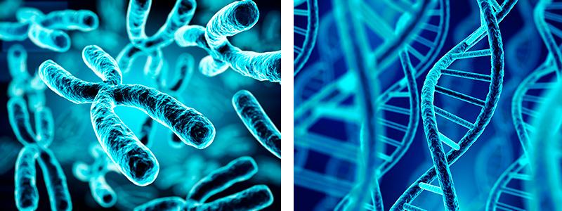 5. El interior de la célula: cromosomas, genes, proteínas...