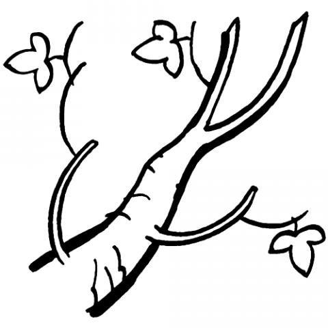 Dibujo infantil para colorear de una rama de árbol en otoño
