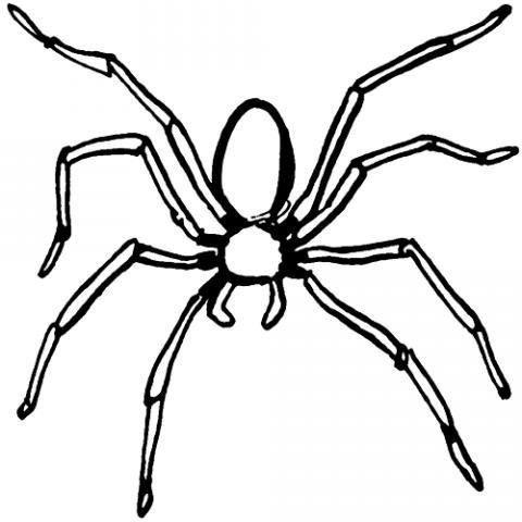 Araña Dibujos Para Colorear