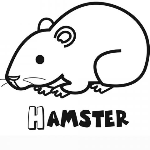 Dibujo gratis de un hámster para colorear. Dibujos de mascotas