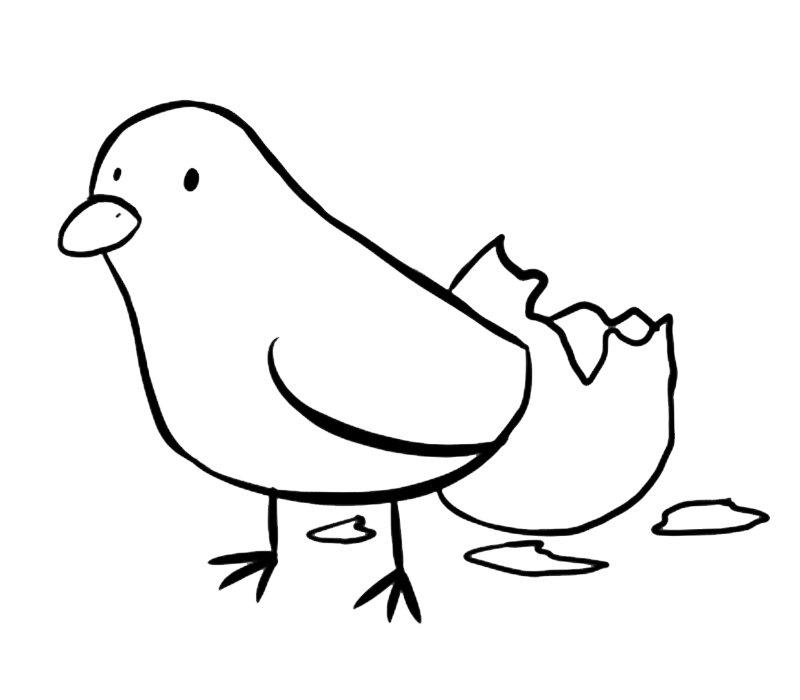 Pollito Recién Nacido Dibujos Para Colorear