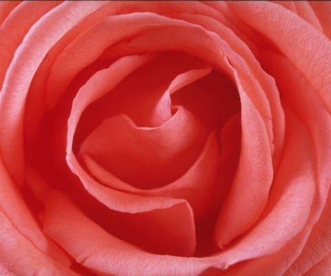 Una rosa para ti, tarjetas virtuales para el Día de la Madre