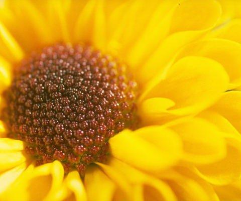 Una margarita para ti, postales virtuales de flores