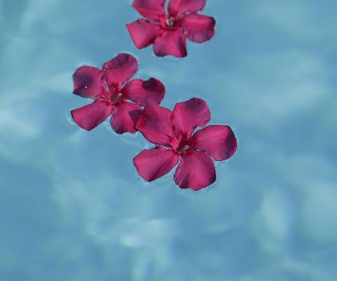 Feliz San Valentín, tarjeta de flores gratuita