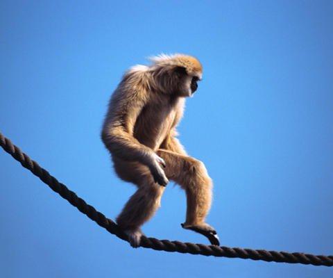 Mono trapecista