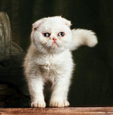 Foldex: mitad gato, mitad búho