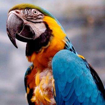 Guacamayo: a todo color