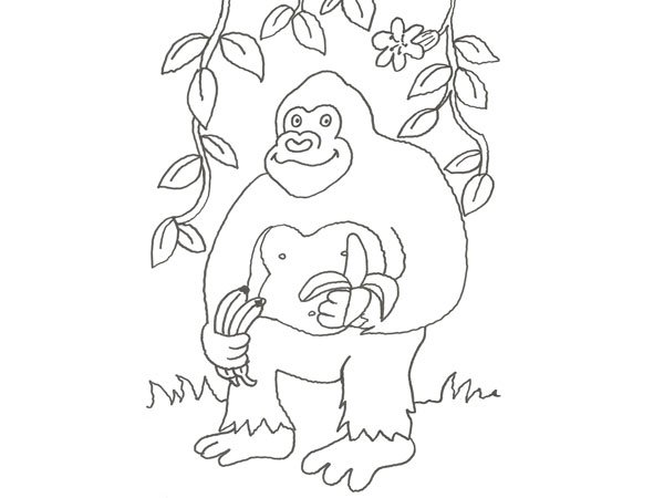 Dibujo de un gorila de la selva para colorear con niños