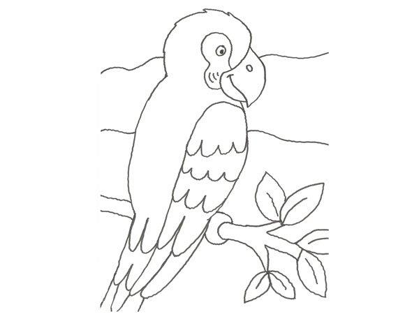 Dibujo de un papagayo para colorear con niños