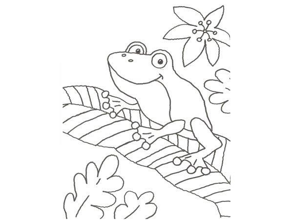 Dibujo para pintar con niños de una rana en la selva