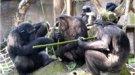 Campamento del Zoo de Barcelona